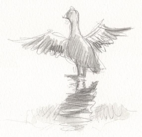 Colvert battant des ailes