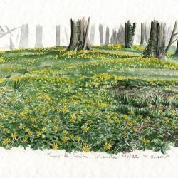 Ficaires dans un parc de Senonches, début avril