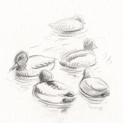 Groupe de colverts sur la mare