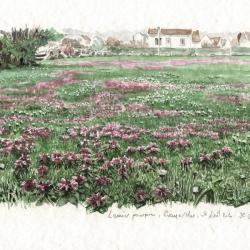 Lamiers pourpres sur une pelouse à Graye-sur-Mer en mars
