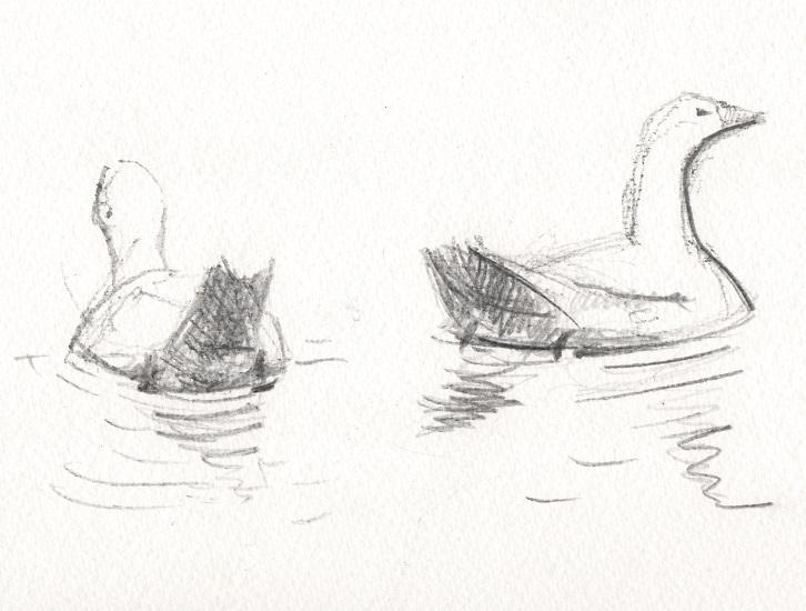Oie sur l'eau, deux poses