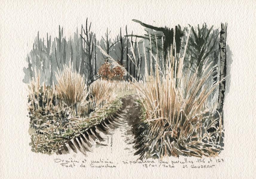 Ornière et molinie, forêt de Senonches