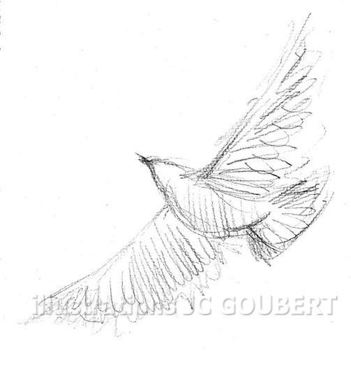 Pigeon en vol
