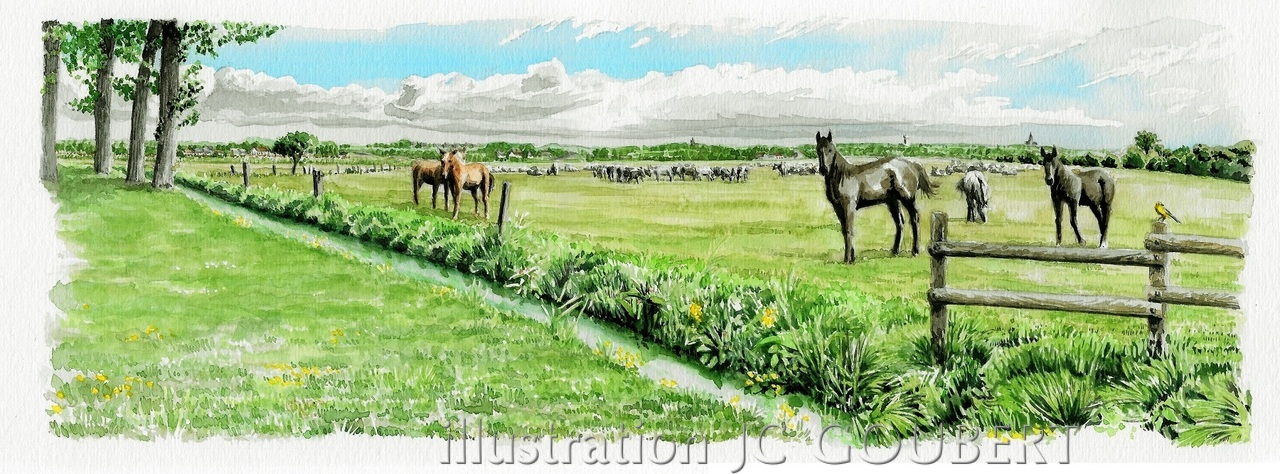 Table de paysage d'Appeville, vue l'été